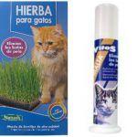Hierba para gatos en Mercadona - Donde comprar Online
