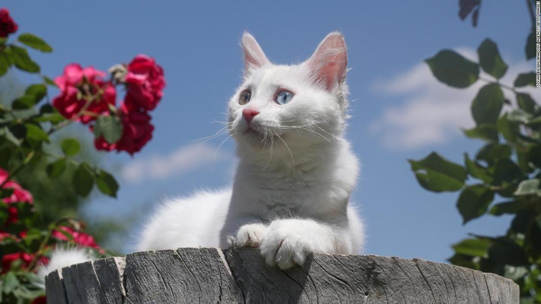 Los mejores repelentes para gatos de 2020
